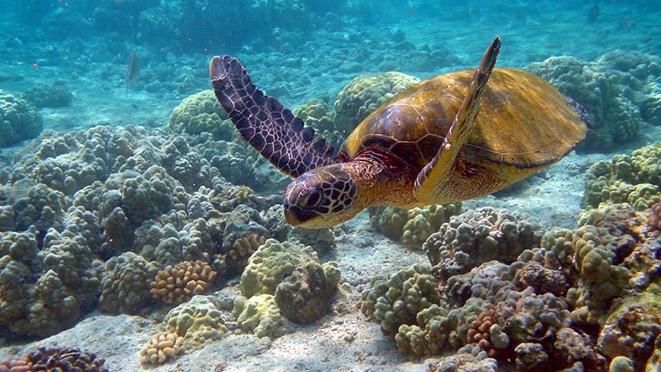 A csodás víz alatti világ