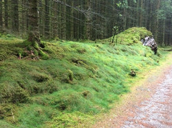 mesebeli erdő