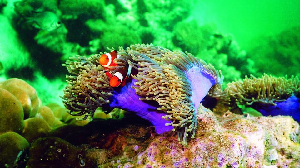 Élet a koralzátonyokon