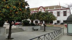 Narancsfák Ceutaban
