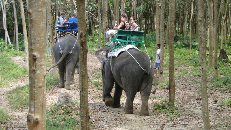 Ko Lanta, kirándulás elefántháton