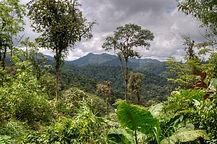Ecuador Cloud Forest.jpg