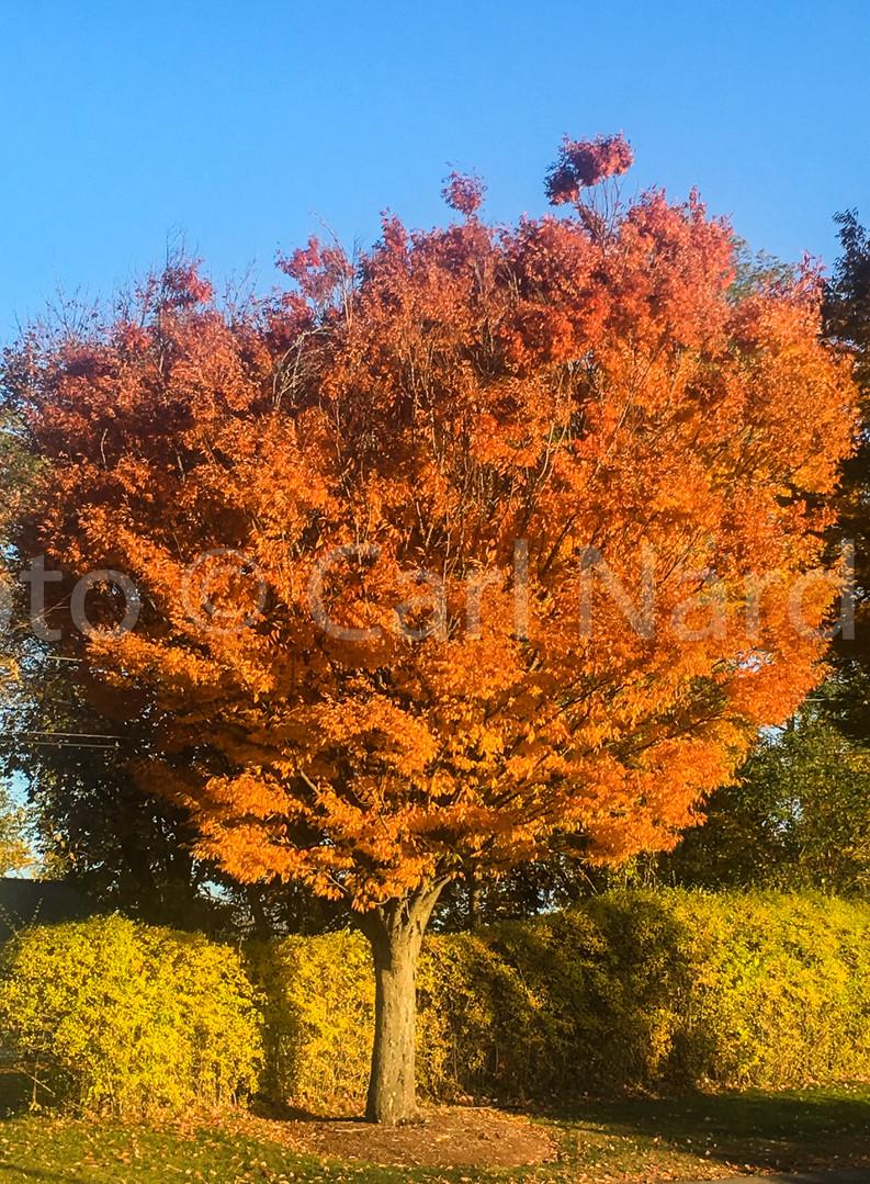 Oct. Floral-7.jpg