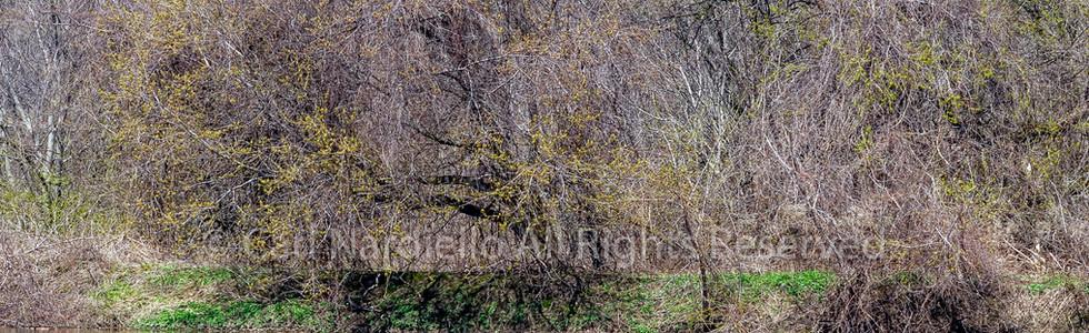 #7152-Riverbed April