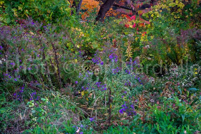 October 20 Peak Autumnal #8096.jpg