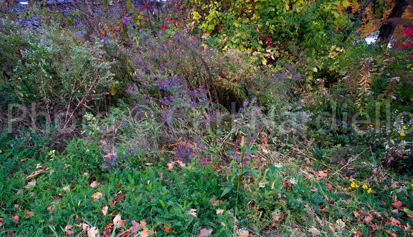 Oct. Floral-4.jpg