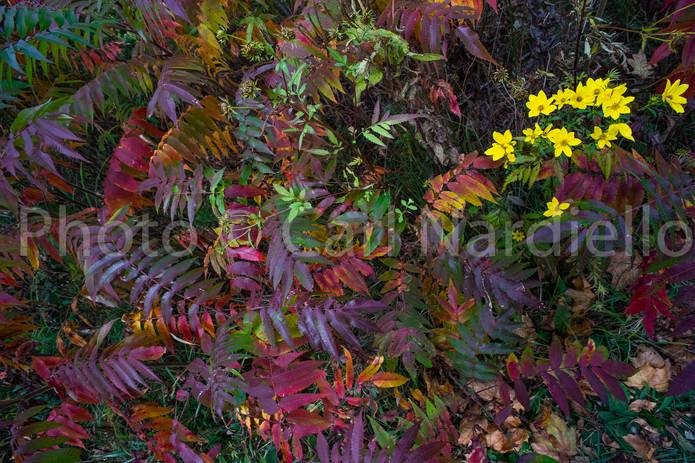 October 20 Peak Autumnal #8163.jpg