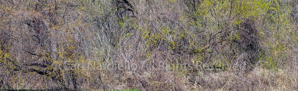 #7155-Riverbed May