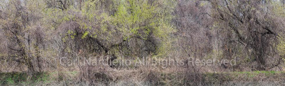 #2983-Riverbed April