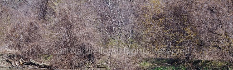 #7117-Riverbed November