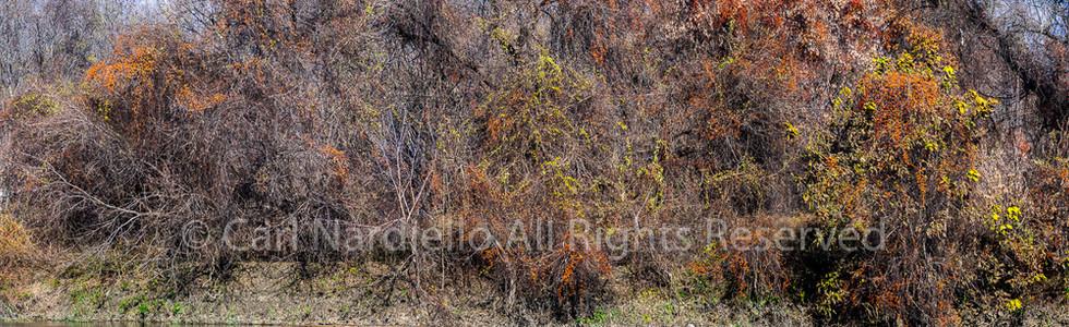 #7461-Riverbed October
