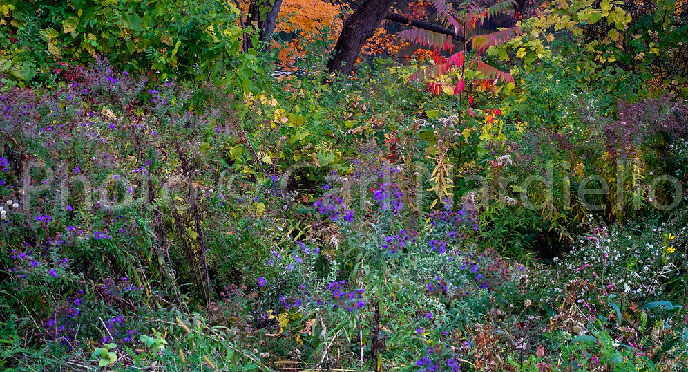 Oct. Floral-2.jpg