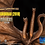 Thumbnail: King Ghidorah Statue - Deluxe Edition | Spiral Studios