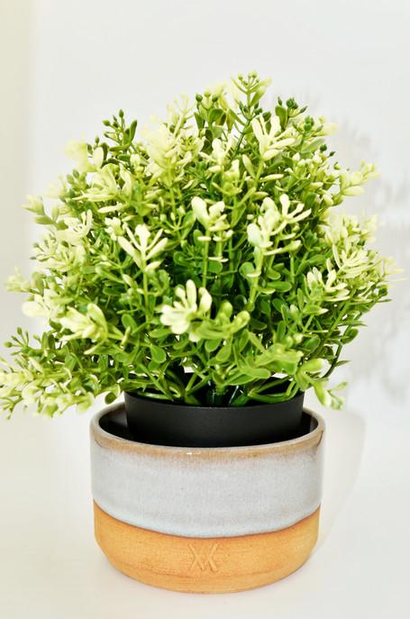 pot plantes blanc copie.jpg