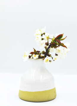 soliflore blanc20.jpg