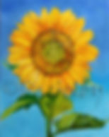 copyright.sunflower.jpg