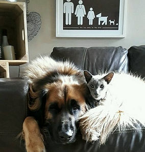 Pet sitting for cats and dogs
