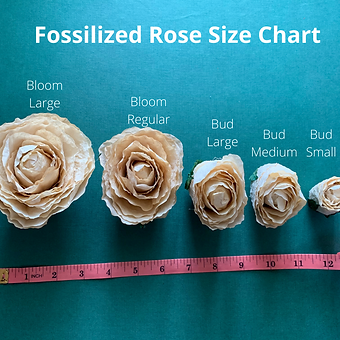 Fossilized Rose Size Chart.png