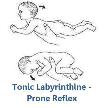 novorodenecké reflexy