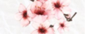 soloflores.jpg