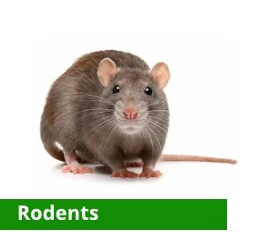 Rodents.PNG