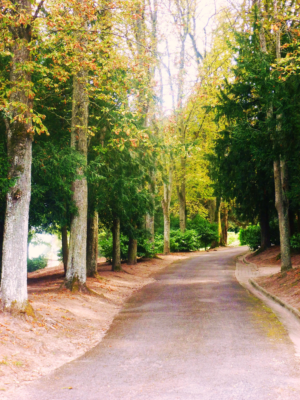 Tree Lined driveway leading to Chateau La Perriere