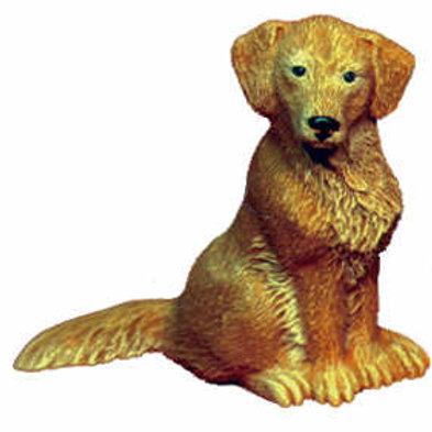 Small Dog - Golden Retriever