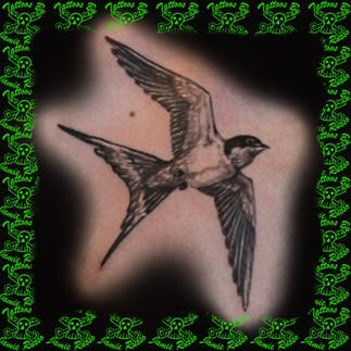 bird Tattoo by Jamie Russo Barrie