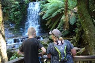 Waterfalls, Tall Trees and Glow Worms... Mount Field National Park!
