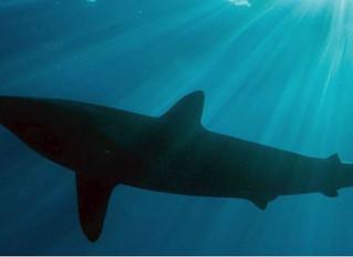 Os contadores na rota do tubarão!