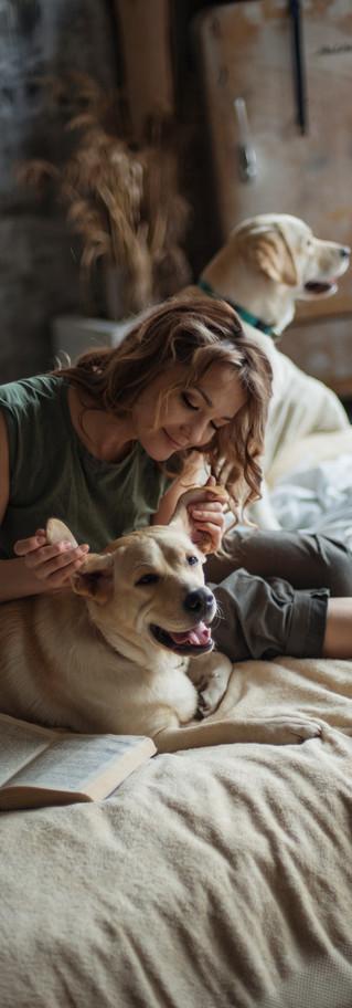 pets story