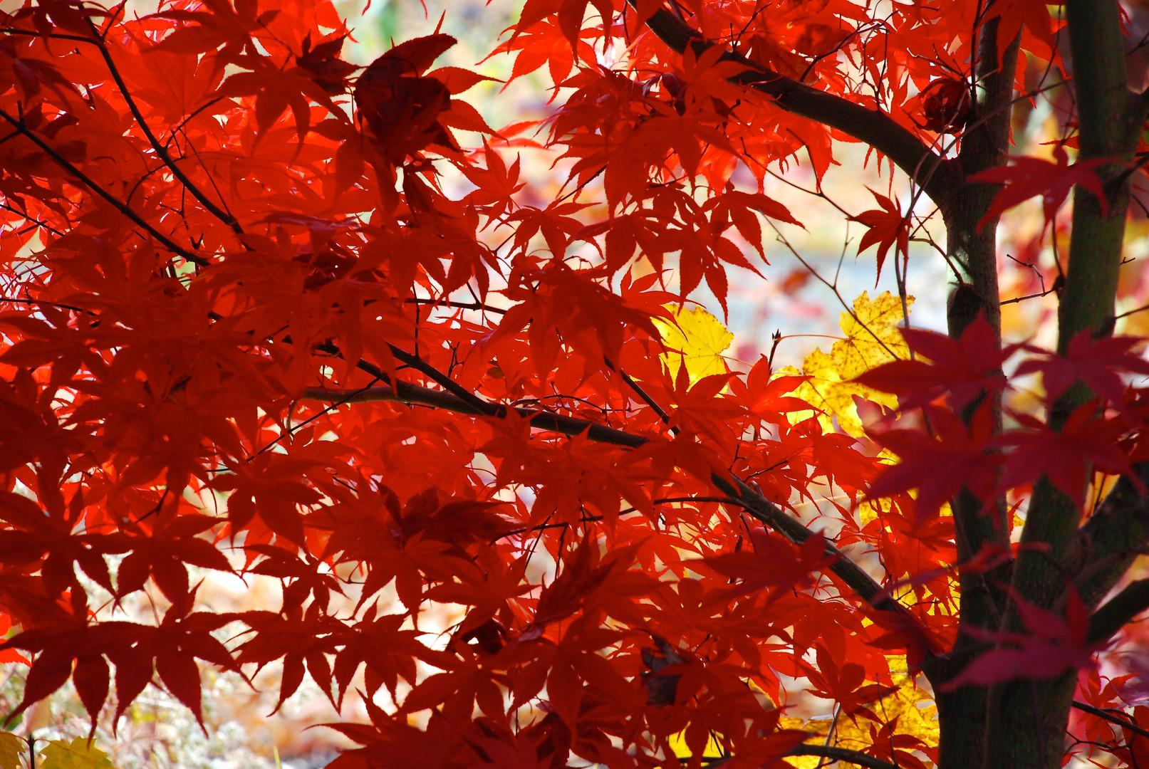japanesem_0430-version-2.jpg