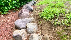 庭いじり家いじり : クラピアの進捗
