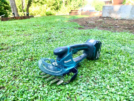 庭いじり : クラピアの刈り込みと増産
