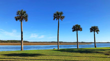 Amazing Paddles on Amelia Island - No. 11 Kingsley Plantation