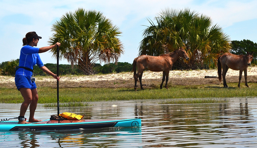 paddle boarding tour with wild horses