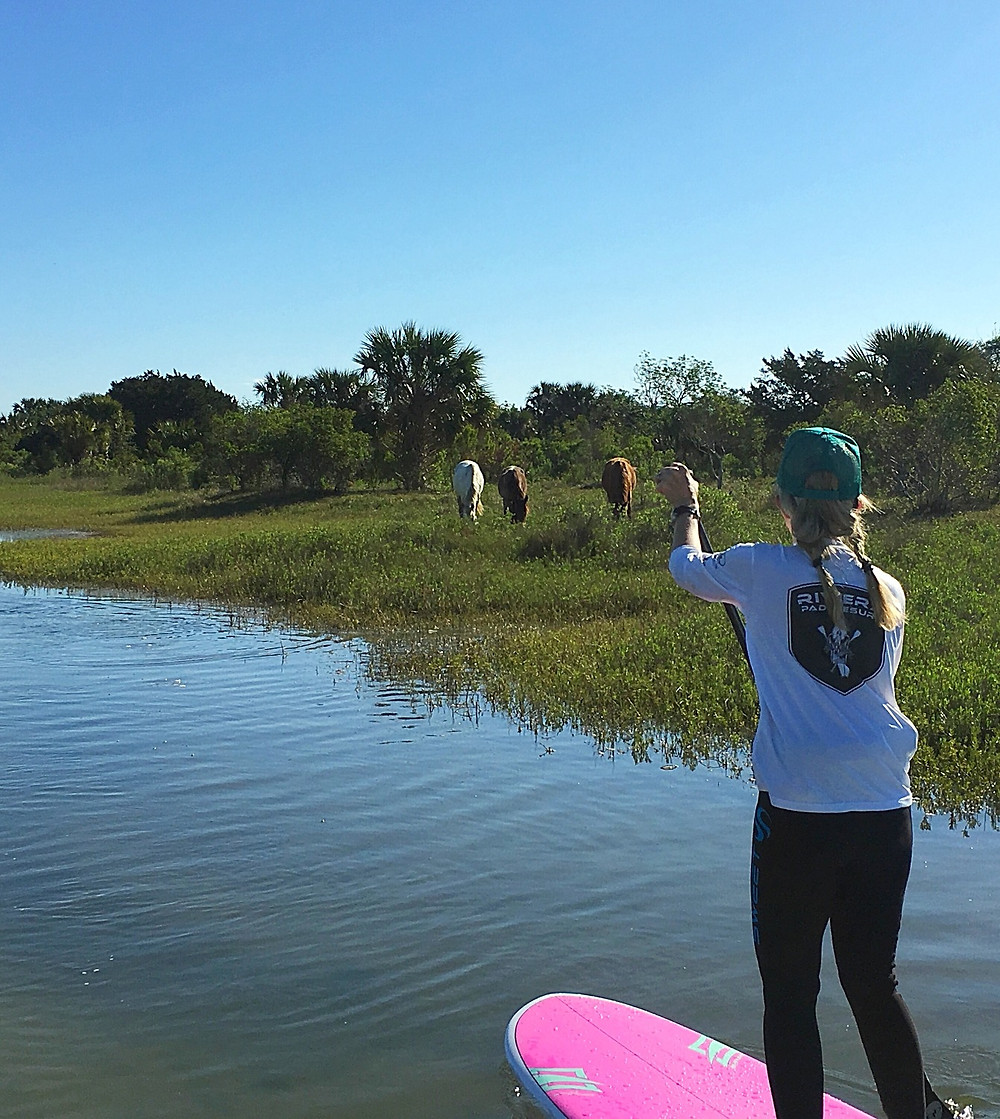 Guided paddle boarding tour with wild horses