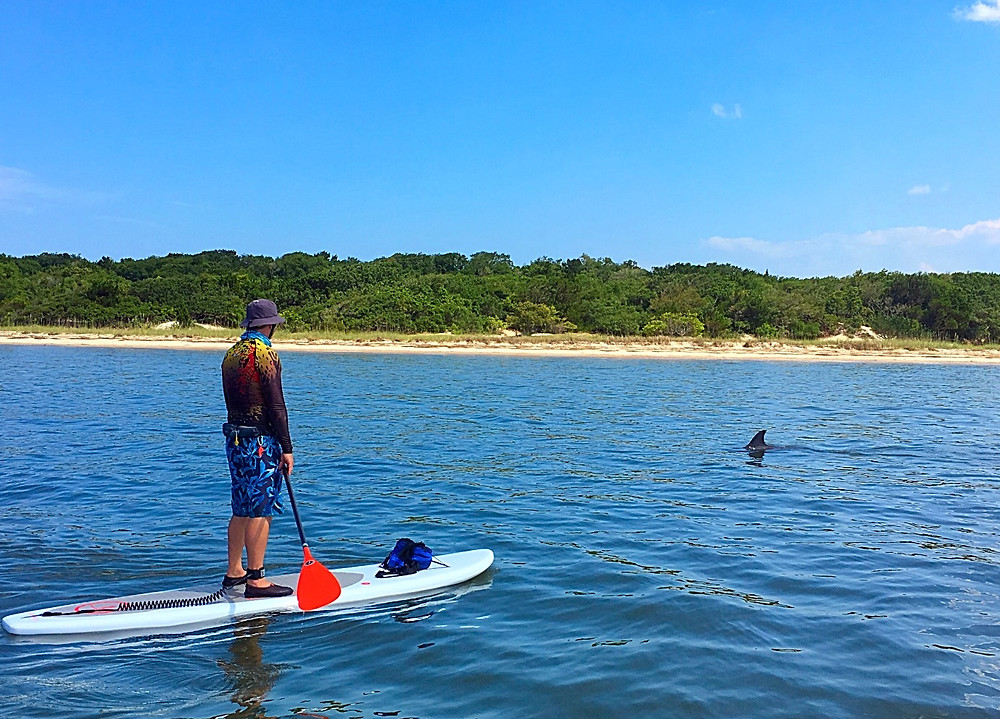 paddle boarding with dolphin