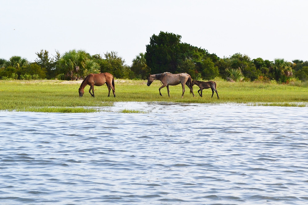see wild horses on paddle boarding tour