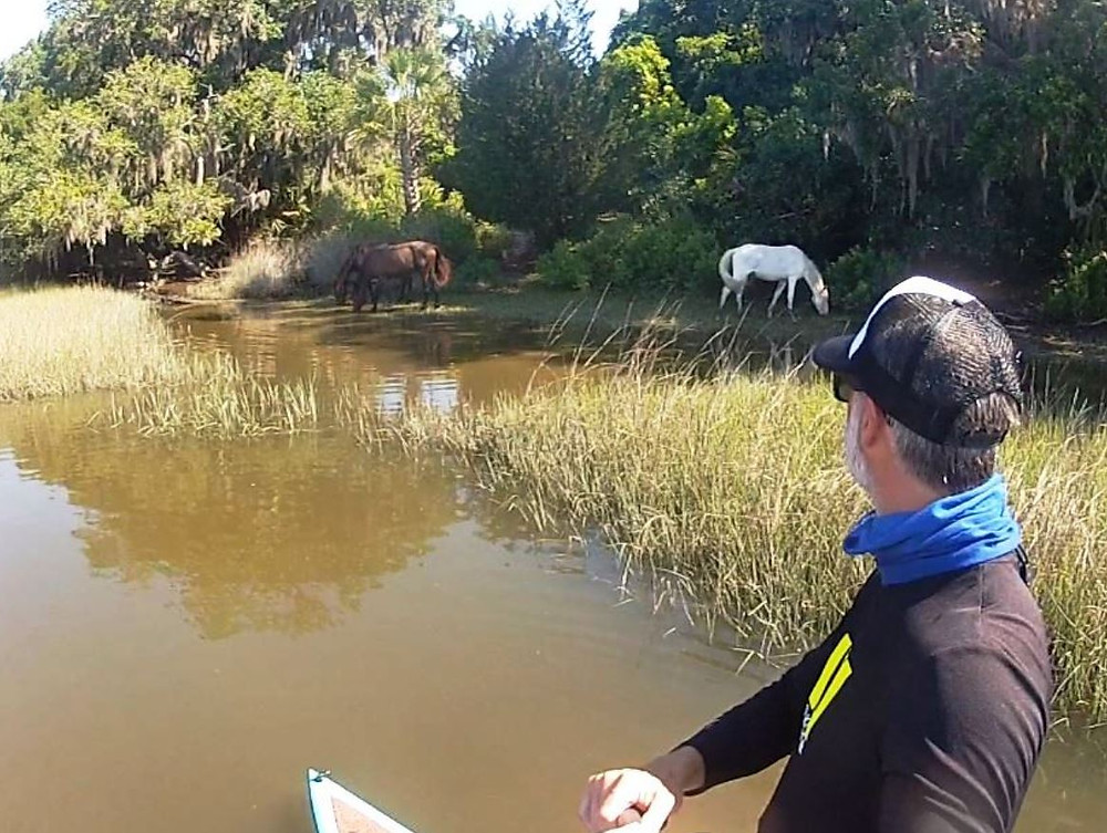 paddle boarding with wild horses