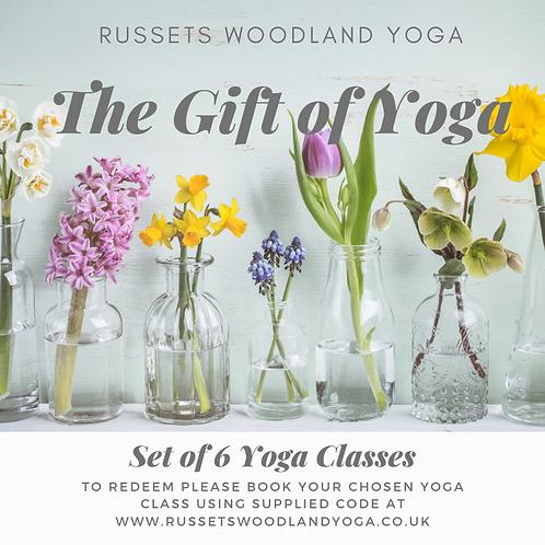 Set of 6 Yoga Classes