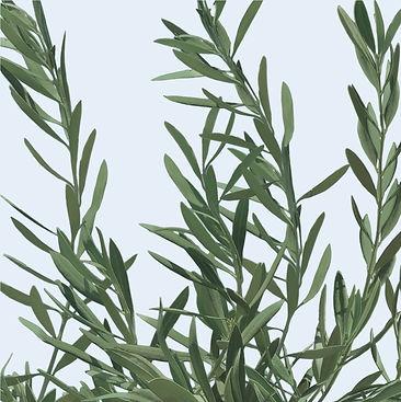Olive Leaves cropped- lighter blue.jpg