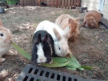 Sayo, Miyu, Kopa, Smoker, Thor, Paulys kleine Hoppelbande