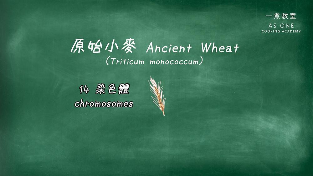 ancient wheat einkorn