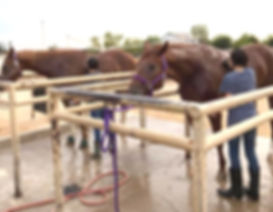 horsewash.jpg