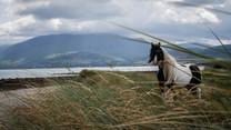 Into The West - Dingle Peninsula
