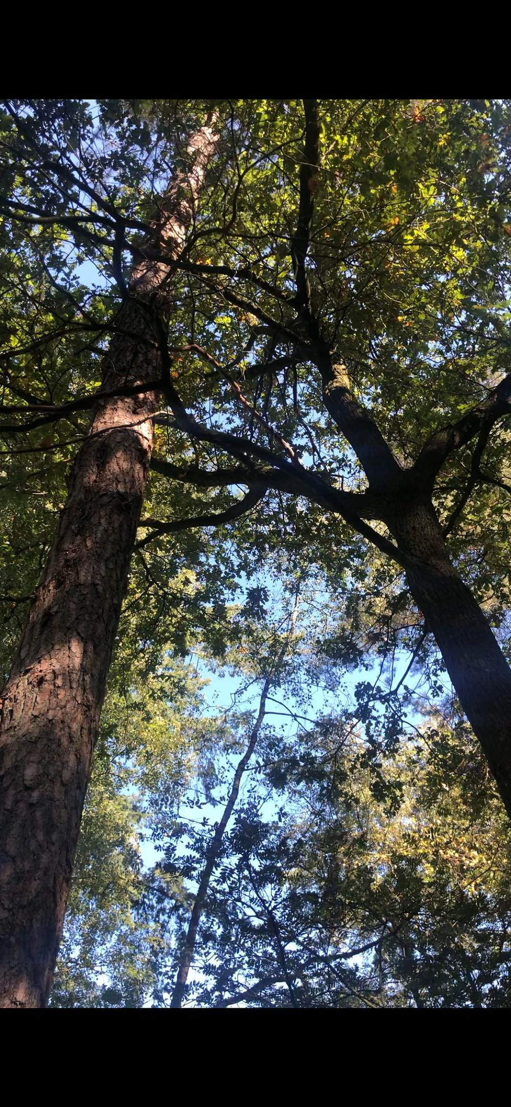 twee bomen grijpen in elkaar