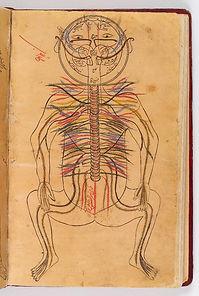 nervous system image.jpg