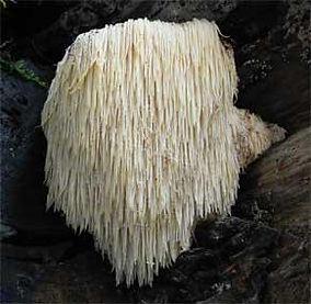 Medicinal Mushroom.jpg