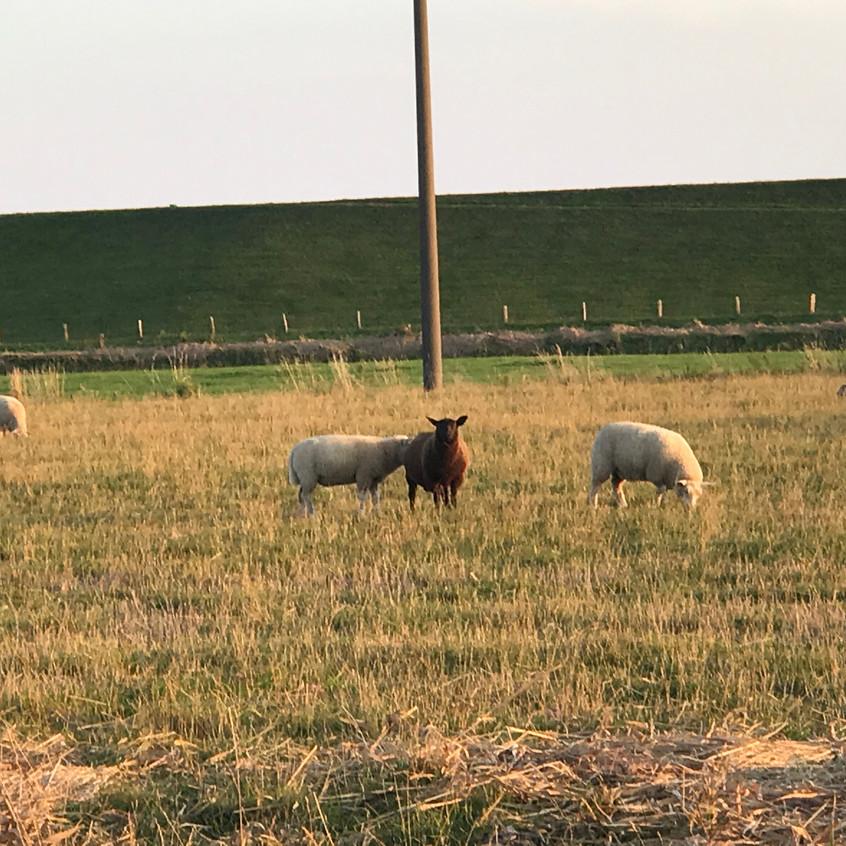 Es gibt auch schwarze Schafe ...!!!!